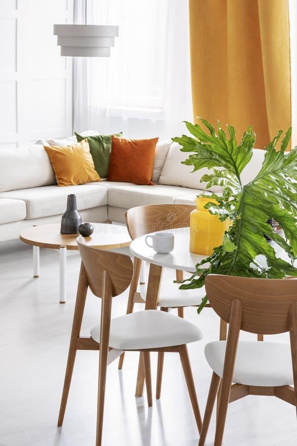 Groot groen blad in glasvaas op de houten lijst in kleurrijke woonkamer van modieuze flat stock fotografie