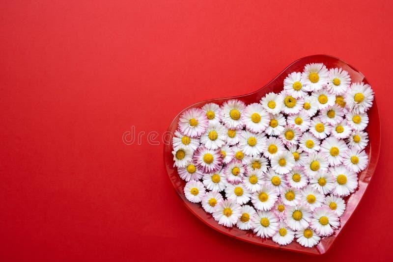 Groot hart van madeliefjebloemen op rode achtergrond Exemplaarruimte, bovenkant stock foto