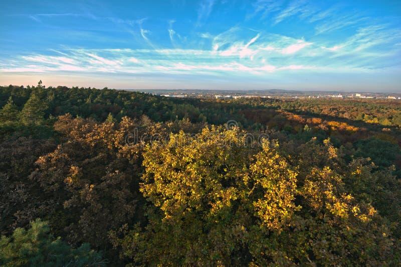 Groot herfst bosbeeld met mooie hemel royalty-vrije stock foto's