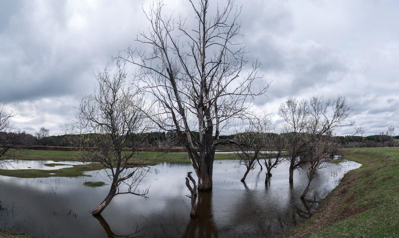 Groot landschap met kale bomen die in het water staan tijdens de overstroming van de rivier in de lente Wolken in de lucht royalty-vrije stock foto