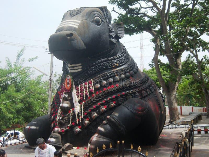 Groot Nandi-standbeeld in Nandi Hills dichtbij banglore stock afbeeldingen