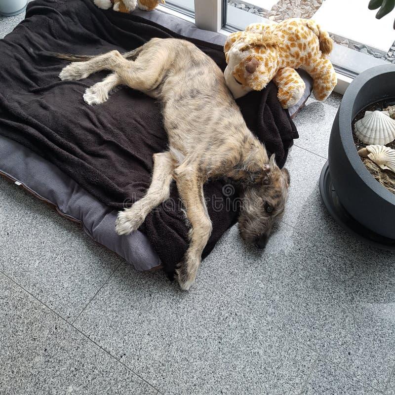 Groot puppy stock afbeeldingen