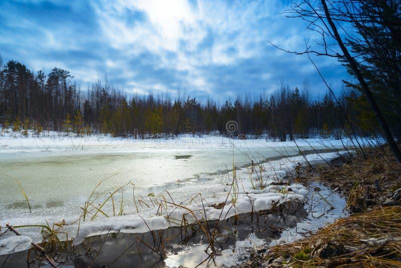 Groot sneeuw ontdooid flard in de houtlente stock afbeelding