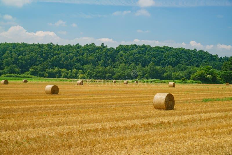 Groot Strobroodje die in het landbouwbedrijf liggen stock foto