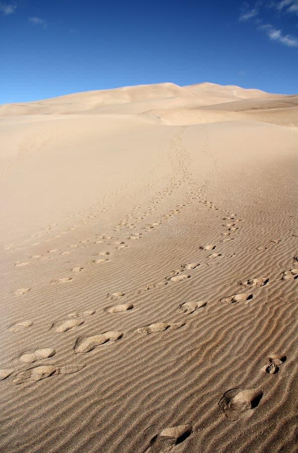 Groot zandduin in de V.S. stock afbeelding