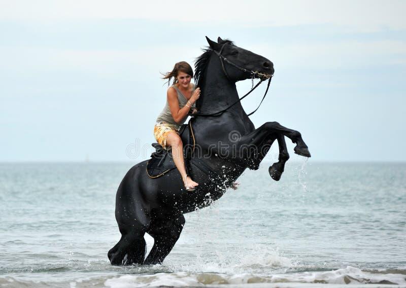 Grootbrengend paard stock foto's