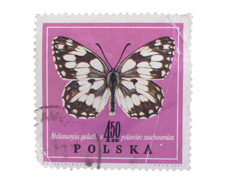 GROOTEBROEK ,THE NETHERLANDS - MARCH 8,2016 : A stamp printed in. Poland shows butterfly in ,circa 1967 stock photos