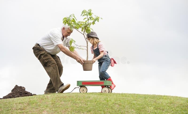 Grootvader en kind die boom in de samenhorigheid van de parkfamilie planten royalty-vrije stock afbeeldingen