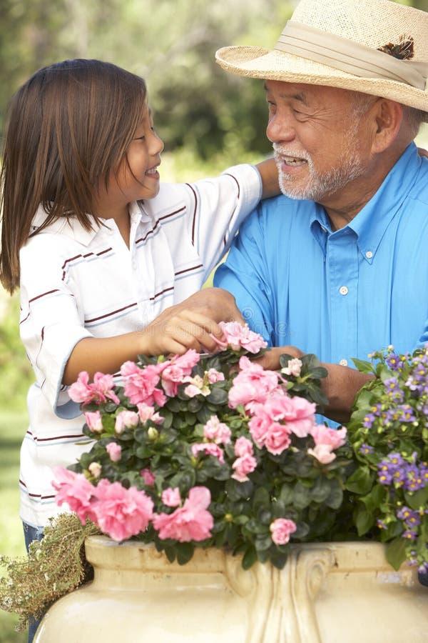 Grootvader en Kleinzoon die samen tuinieren royalty-vrije stock afbeelding