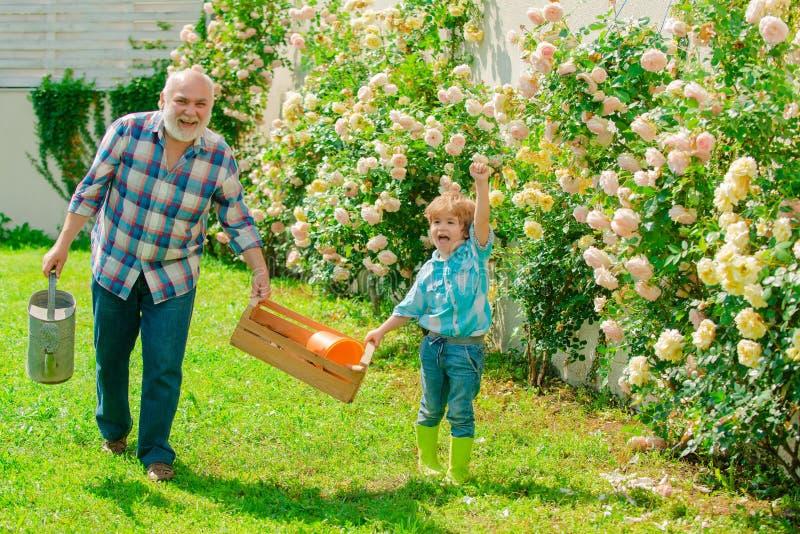 Grootvader en kleinzoon Oud en Jong Concept een pensioneringsleeftijd De vader en de zoon kweken samen bloemen Hogere mens royalty-vrije stock foto