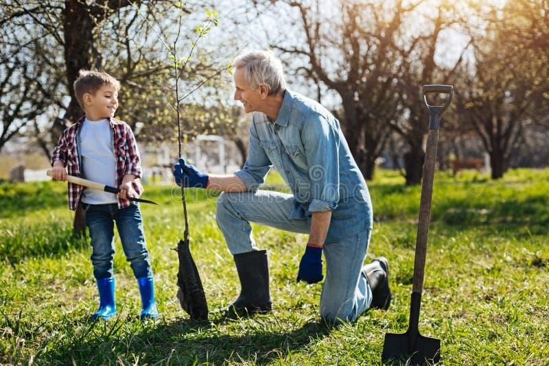 Grootvader en weinig jongen die boom in familietuin planten stock afbeeldingen