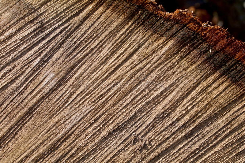 Groovy oak sectioin. Grooves in an oak section with shadows stock photos
