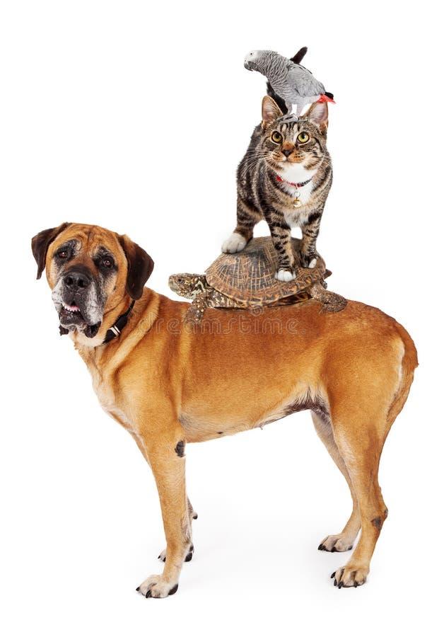 Grop degli animali domestici impilati su fotografia stock libera da diritti