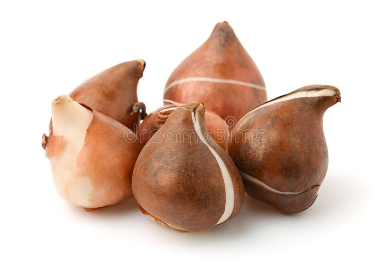 Grop of tulip bulbs. Isolated on white stock image