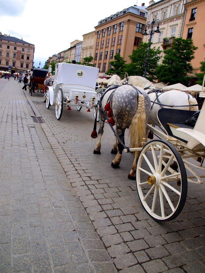 Groppa e cavallo grigio intrecciato coda immagine stock libera da diritti