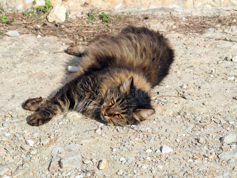 Gros chat égaré velu, pentes d'Acropole, Athènes, Grèce photographie stock libre de droits
