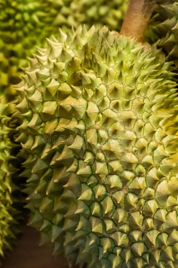 Gros gros fruit de la thaïlande royale de durian. Interdiction stricte des bagages odorants images libres de droits