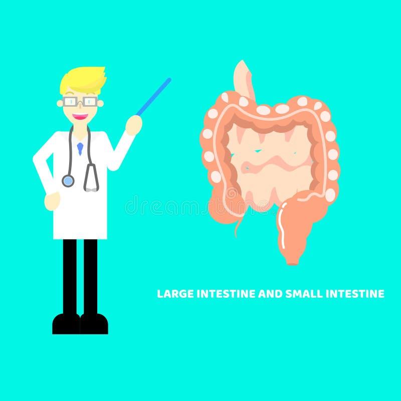 Gros intestin médical de chirurgie d'anatomie de système nerveux de partie du corps d'organes internes, soins de santé d'intestin illustration libre de droits