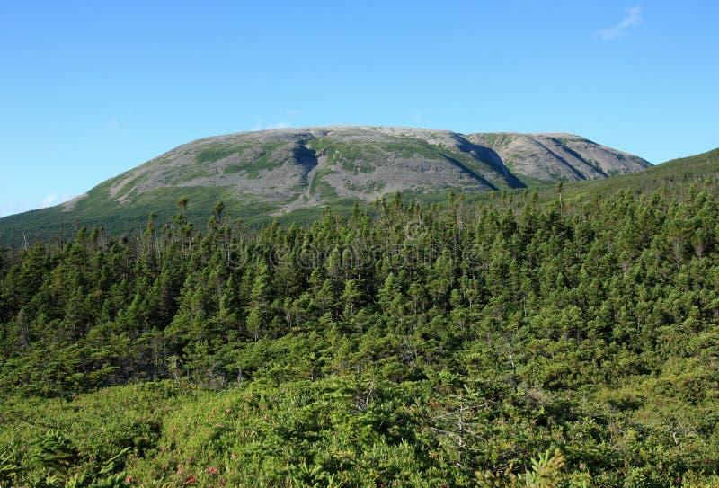 Gros Morne Mountain royalty free stock photography