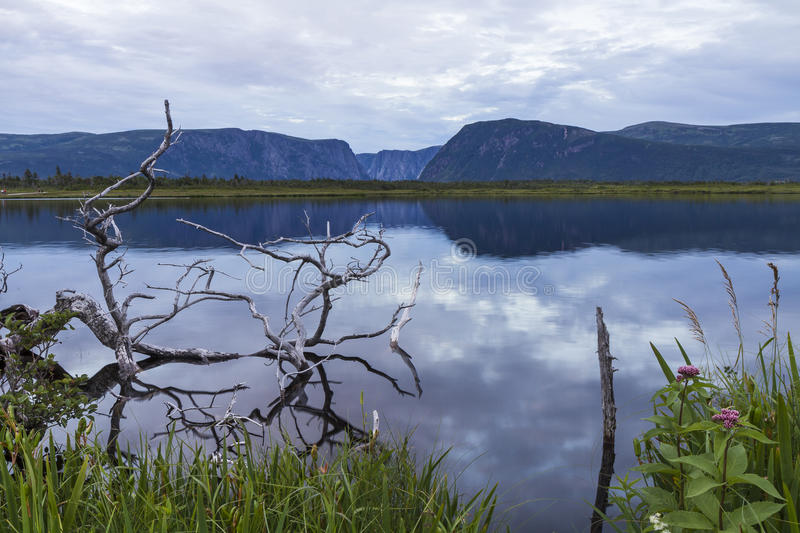 Gros Morne Pond Reflections stock images