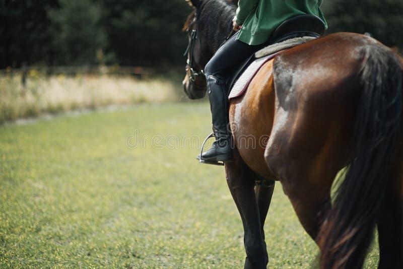 Gros plan sur le côté d'un cheval lors d'un tir de dressage photos stock