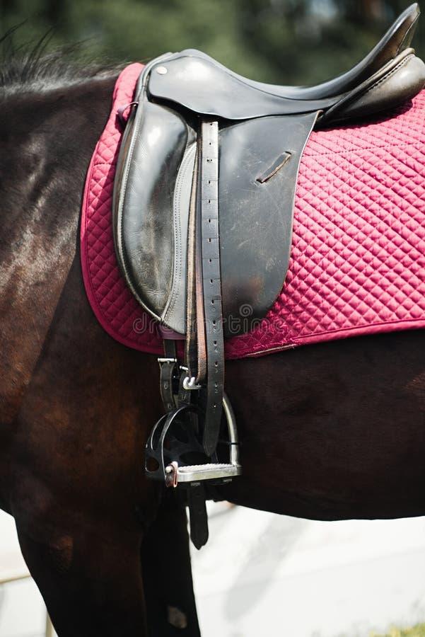 Gros plan sur le côté d'un cheval lors d'un tir de dressage photo stock
