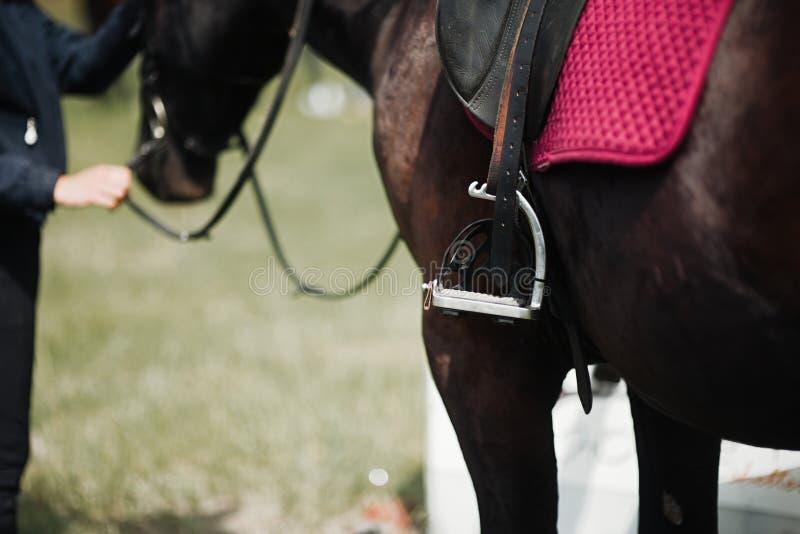 Gros plan sur le côté d'un cheval lors d'un tir de dressage images stock