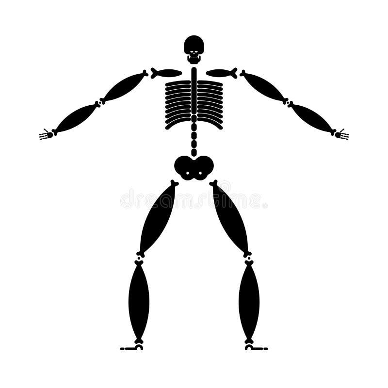 Gros squelette Os large Grosse illustration de vecteur d'anatomie d'homme illustration libre de droits