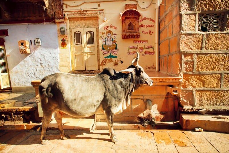 Gros support indien de vache dans la rue étroite photo libre de droits