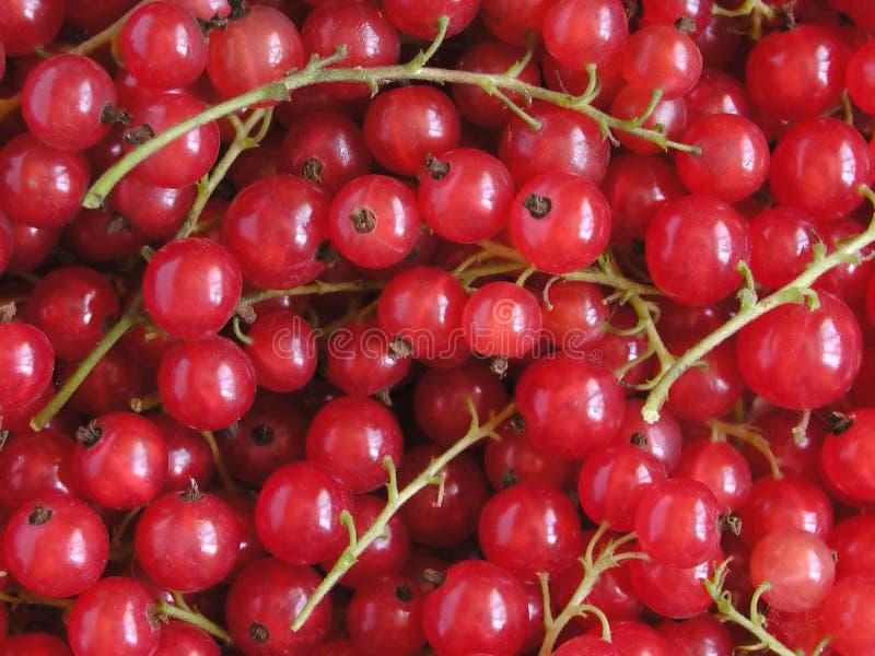 Groseille Rouge Image libre de droits