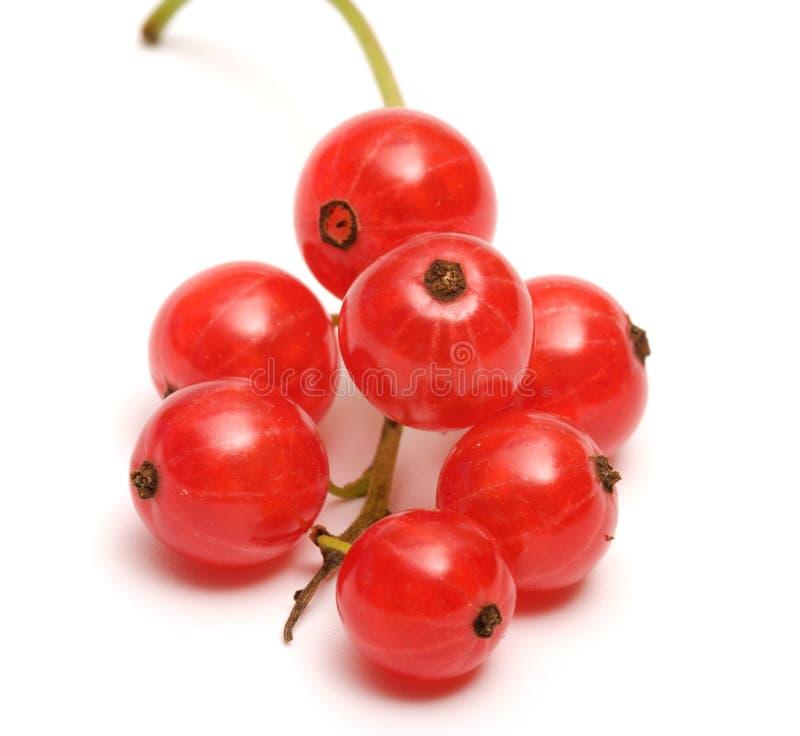Groseille rouge. image stock