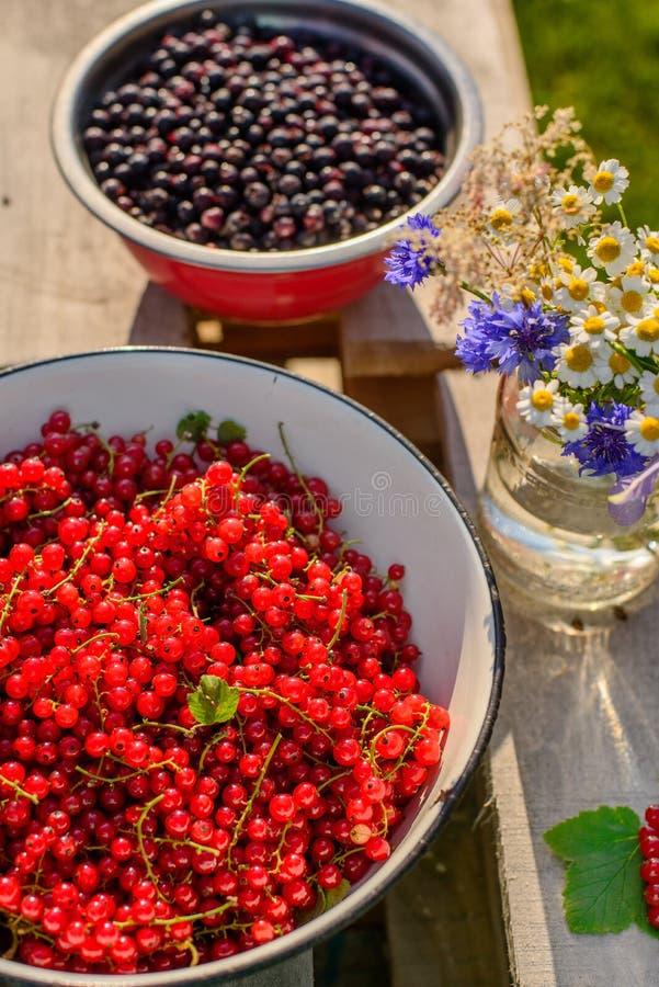 Groseille rouge dans un jardin image libre de droits