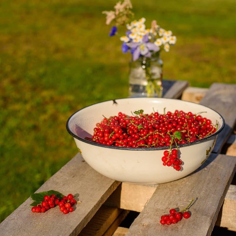 Groseille rouge dans un jardin photographie stock libre de droits