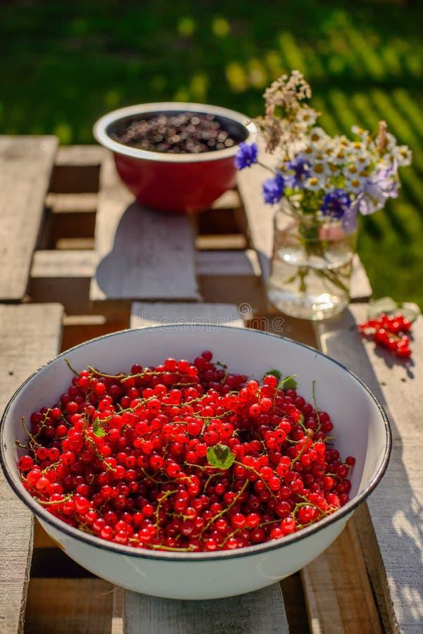 Groseille rouge dans un jardin photos libres de droits