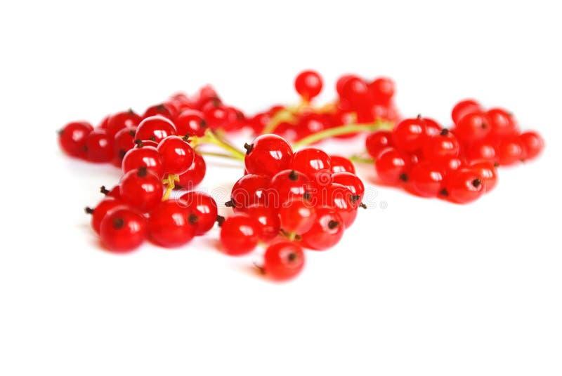 Groseille rouge fraîche image stock