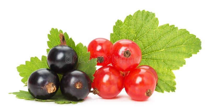 Groseilles noires et rouges d'isolement sur le fond blanc photos stock