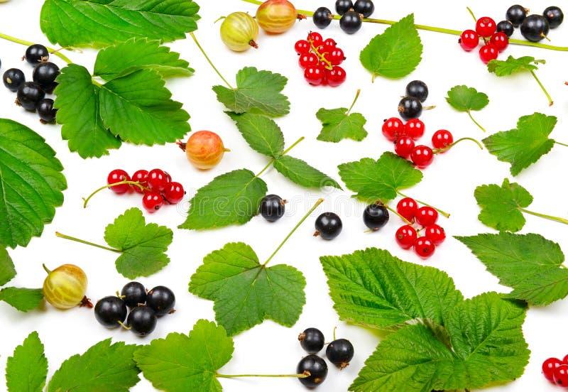 Groseilles noires et rouges, groseilles à maquereau et feuilles d'isolement sur le petit morceau photos libres de droits