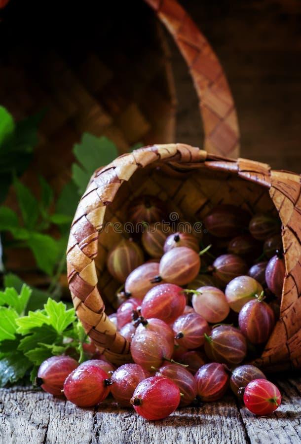 A groselha cor-de-rosa madura, derramada fora de uma cesta de vime, vintage corteja fotografia de stock royalty free