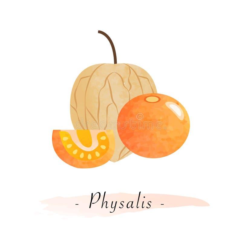 Groselha de cabo saudável do fruto da textura colorida da aquarela ilustração royalty free