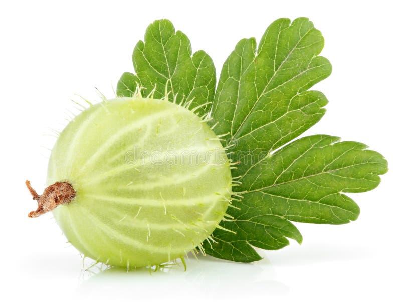 Groselha verde com a folha no branco imagens de stock royalty free