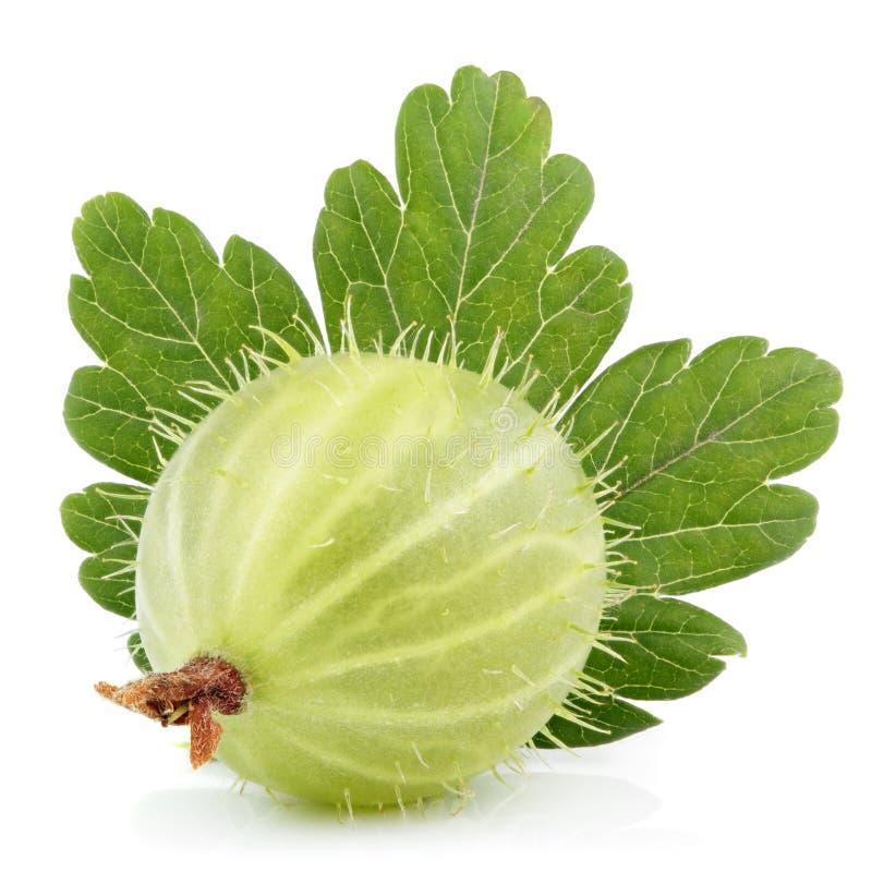 Groselha verde com a folha no branco fotos de stock royalty free