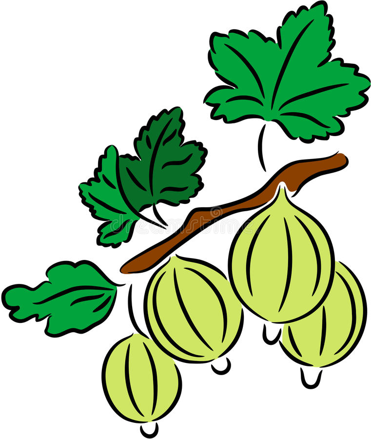 Grosella espinosa stock de ilustración