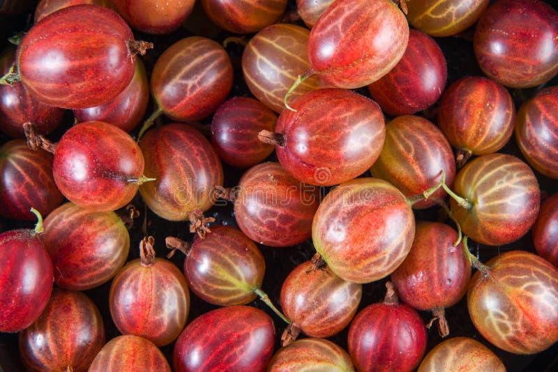 Grosella espinosa roja fresca grande y pequeña fotos de archivo