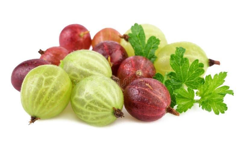 Grosella espinosa verde roja en blanco foto de archivo libre de regalías