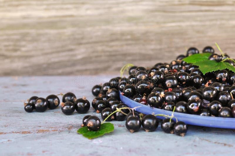 Grosellas negras con las hojas verdes en el banco azul fotografía de archivo