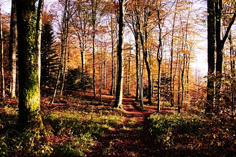 In Grosmagny-Wald lizenzfreie stockfotografie