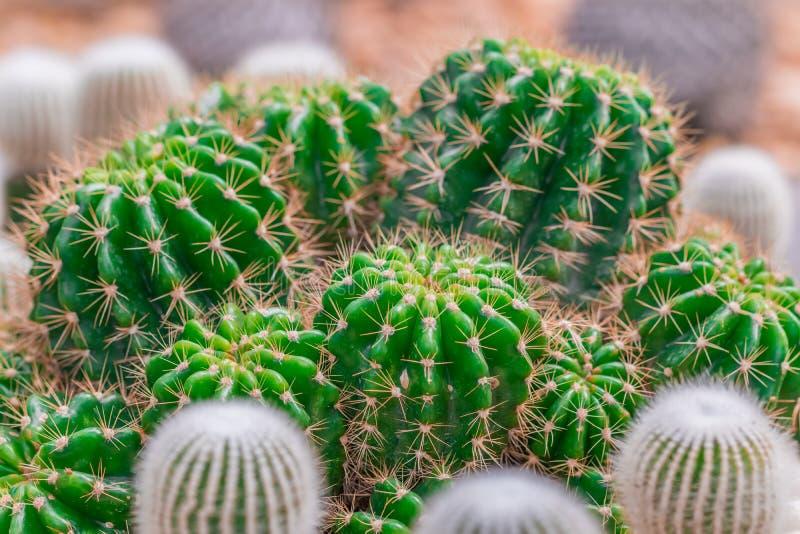 Grosse usine de Cactus image stock