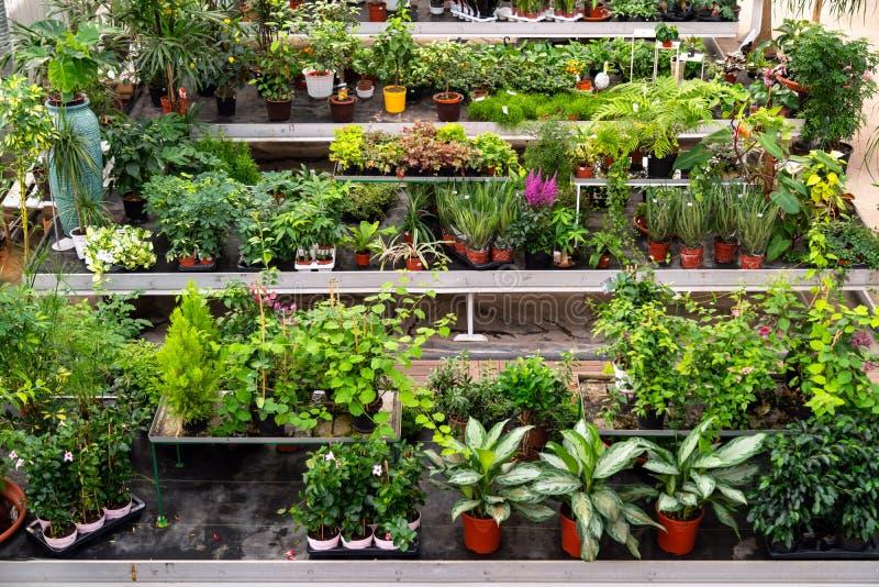Grosse Vielfalt an Pflanzen und Blumen im botanischen Grünen Haus Schöne Orangerie voller dekorativer, seltener, exotischer Pflan stockfotos