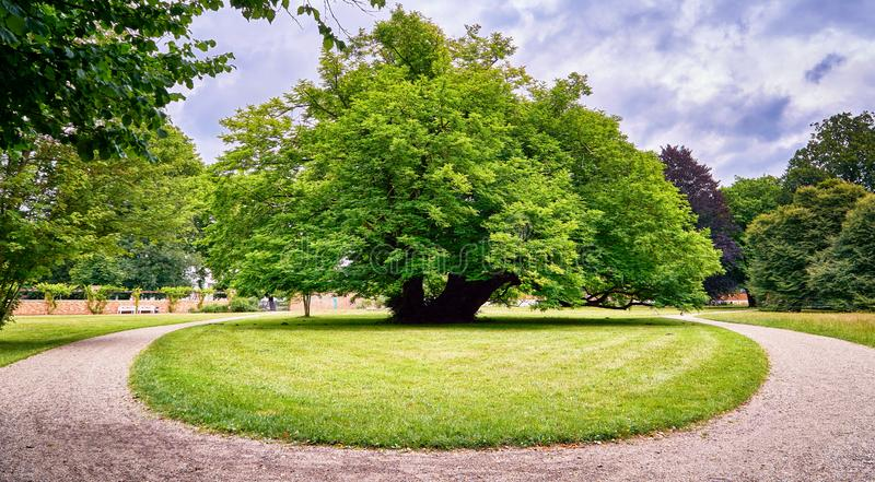 Grosser alter Baum im Park Schwerin, Deutschland stockbilder