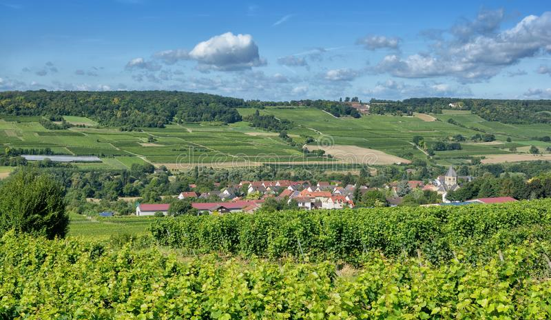 Grosswinternheim, région de vin de Rhinehessen, Allemagne photo stock